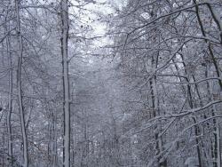 hiver-a-rocques-13